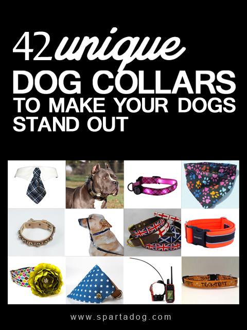 dogcollars