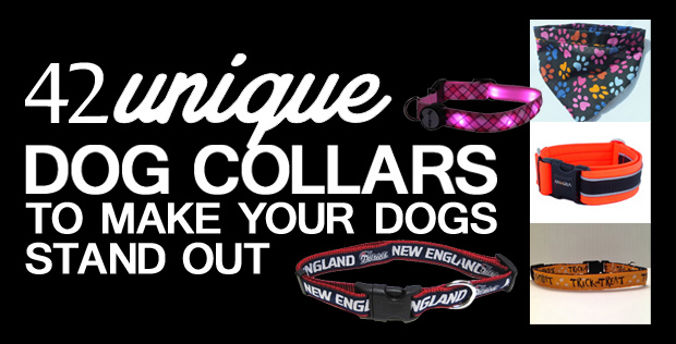 featured-image-collars
