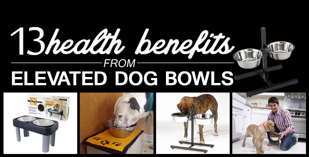 featured-image-dogbowl