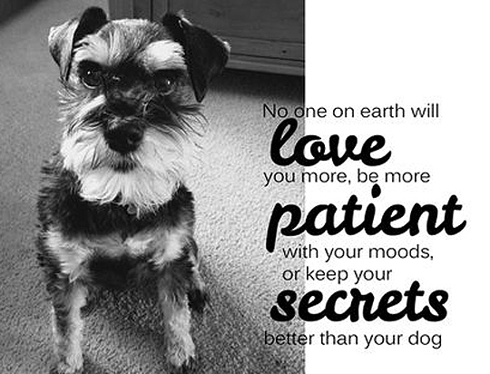 Dog Quotes Love Magnificent 48 Dog Quotes About Love And Compassion SpartaDog Blog