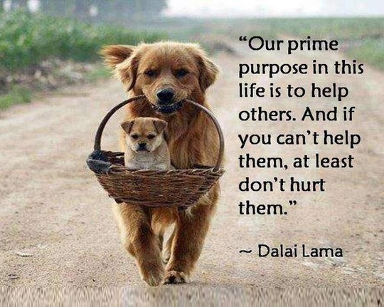 Pet Quotes | 33 Inspirational Dog Quotes Spartadog Blog