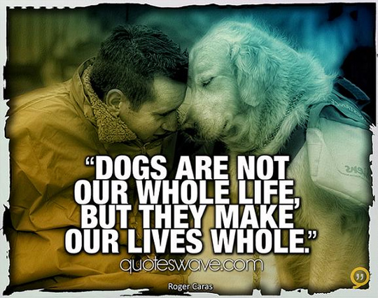 Whole Life Quote Adorable 33 Inspirational Dog Quotes  Spartadog Blog