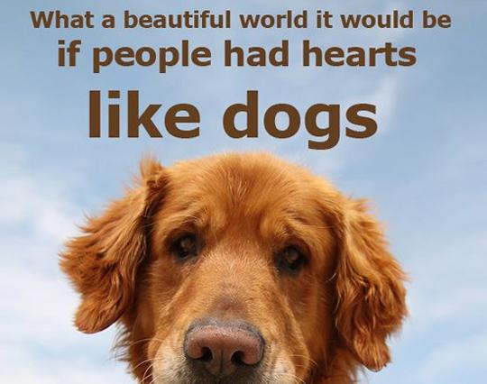 Dog Quotes Mesmerizing 48 Inspirational Dog Quotes SpartaDog Blog