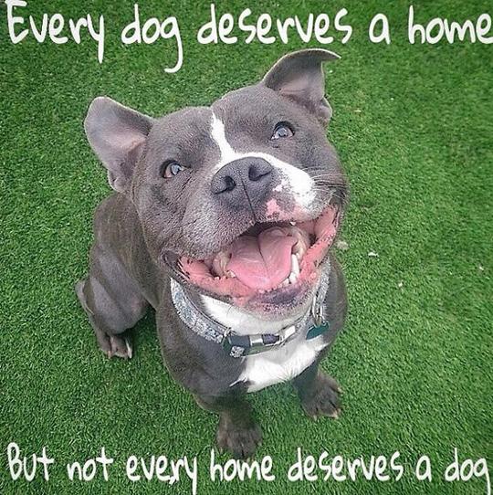 33 inspirational dog quotes spartadog blog for Every dog needs a home