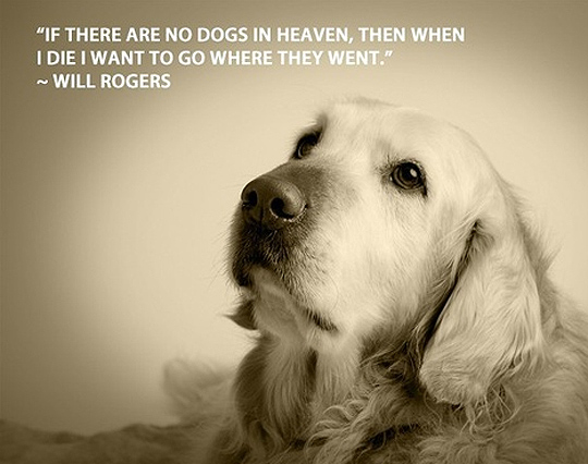 Dog Quotes Inspiration 48 Inspirational Dog Quotes SpartaDog Blog