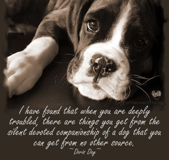 33 inspirational dog quotes spartadog blog for Best dogs for companionship