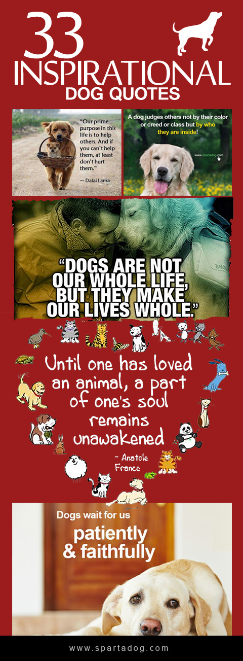 inspirational quotes for dog lovers quotesgram