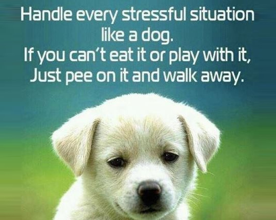 60 Funny Dog Quotes SpartaDog Blog Cool Quotes About Dog Friendship