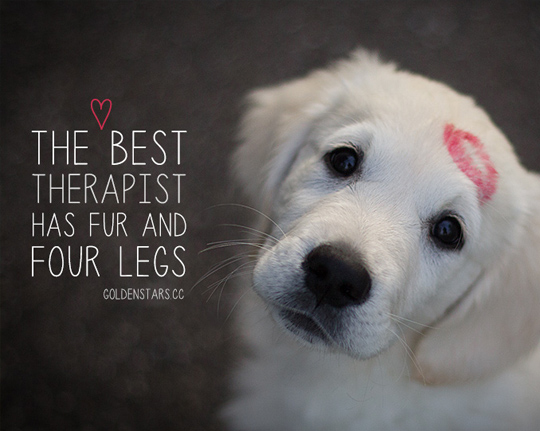 60 Funny Dog Quotes SpartaDog Blog Amazing Quotes About Dog Friendship