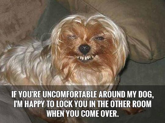 28 funny dog quotes spartadog blog