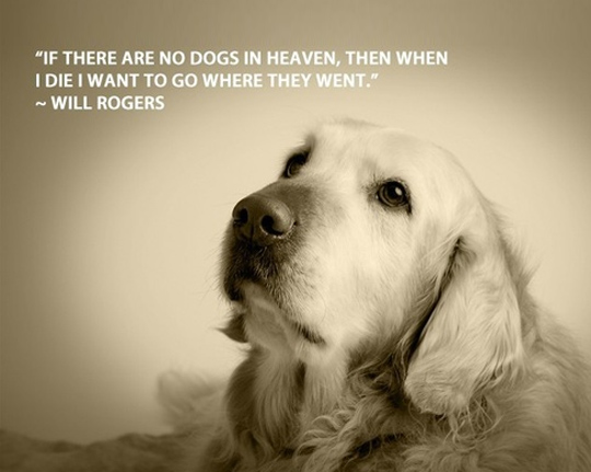 60 Funny Dog Quotes SpartaDog Blog Extraordinary Quotes About Dog Friendship