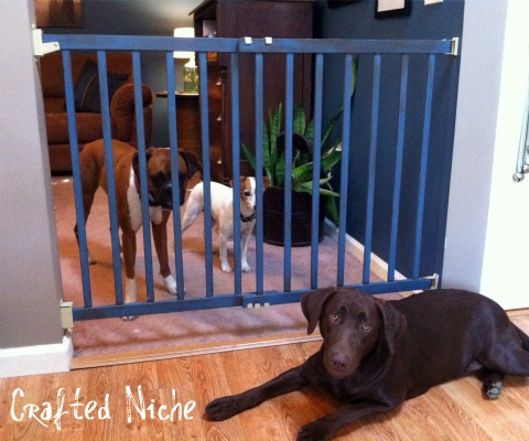DIY PVC Pipe Dog Gate