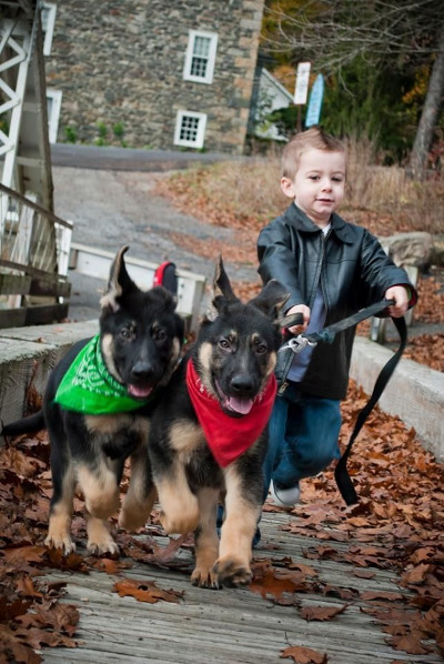Source: http://buzzsharer.com/2015/09/19-reasons-german-shepherds-are-actually-the-worst-dogs-to-live-with/