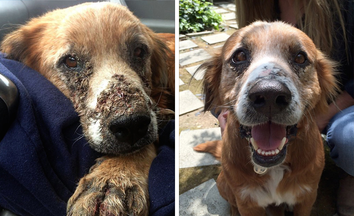 32 Before And After Rescue Dog Photos Spartadog Blog