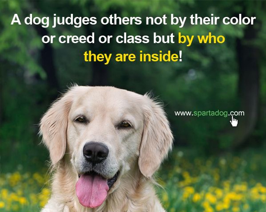 33 Inspirational Dog Quotes - SpartaDog Blog