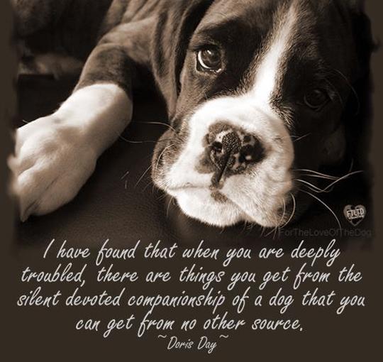 33 Inspirational Dog Quotes