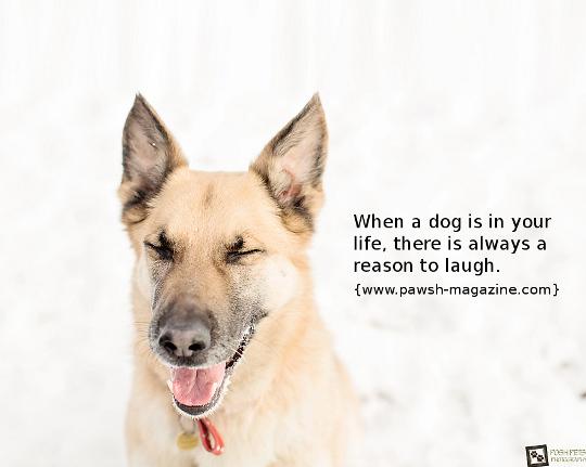 33 Inspirational Dog Quotes Spartadog Blog