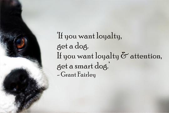 33 Inspirational Dog Quotes - SpartaDog Blog